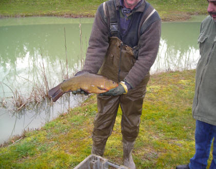 big-tench-from-smallwater-lake