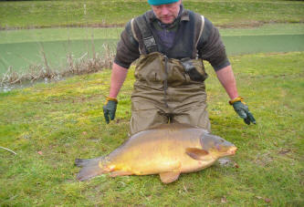 fifty-pound-carp-50lb-mirror-carp